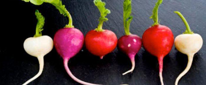 Consejos publicados en un periódico sobre el uso del rábano y la responsabilidad derivada de daños causados por los productos: el nombre de la rosa.